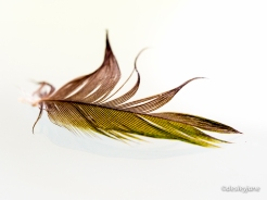 Feather on Glass Table