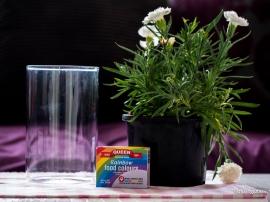 Ingredients (Carnation).
