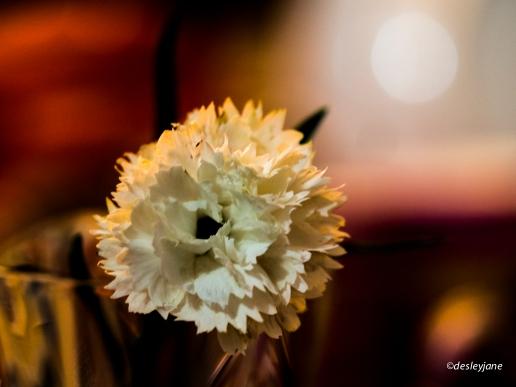 Carnation (Before).