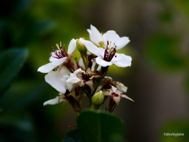 Flower in Colour