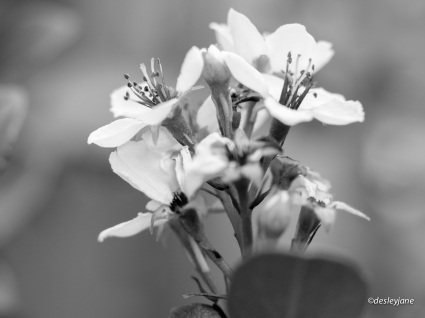 Flowery Drama