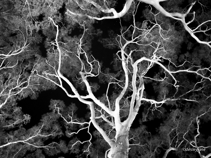 2015_Arterial Canopy-1