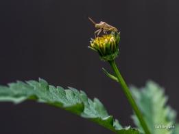 Little bug.