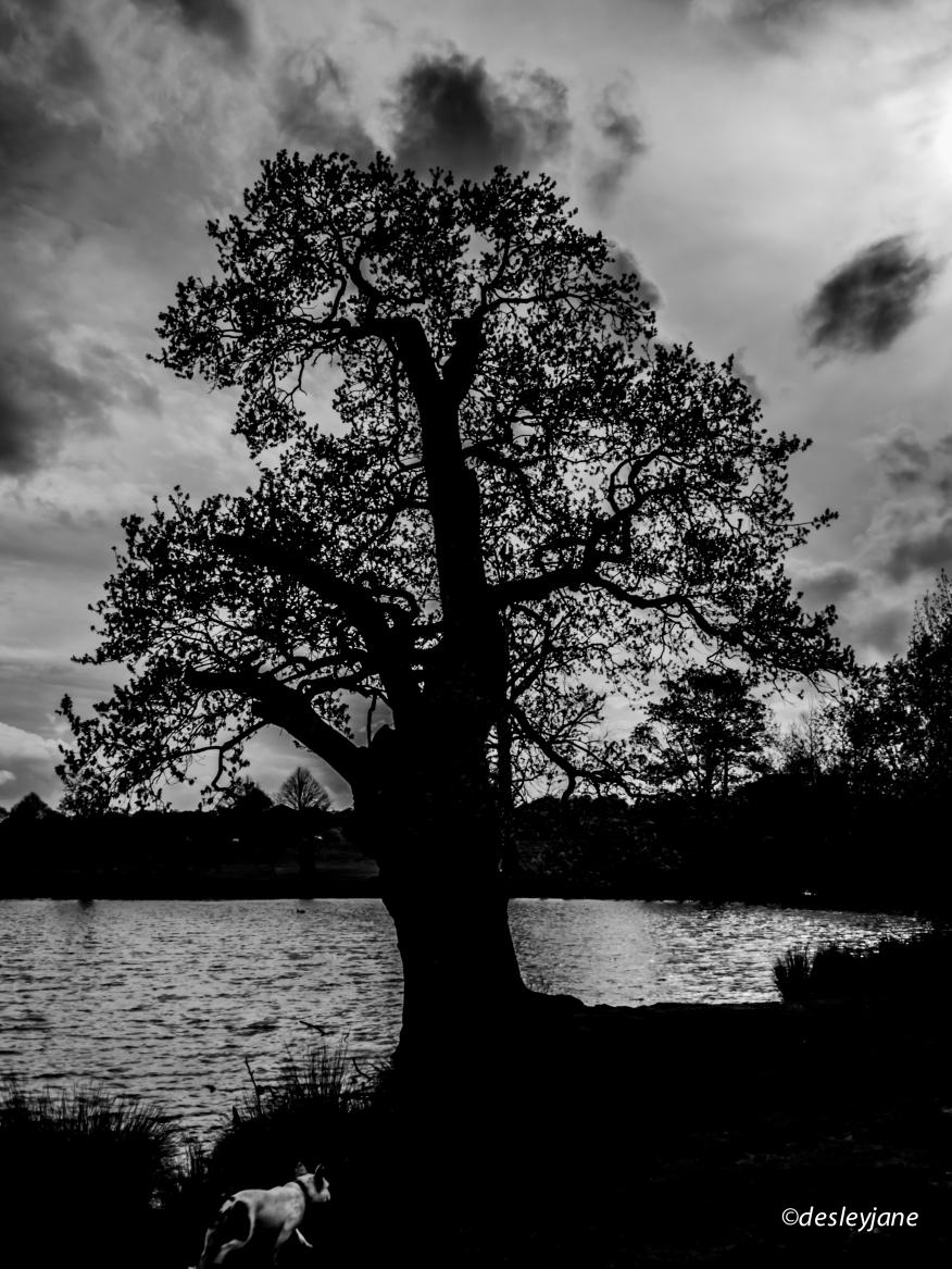 Richmond Park silhouette.