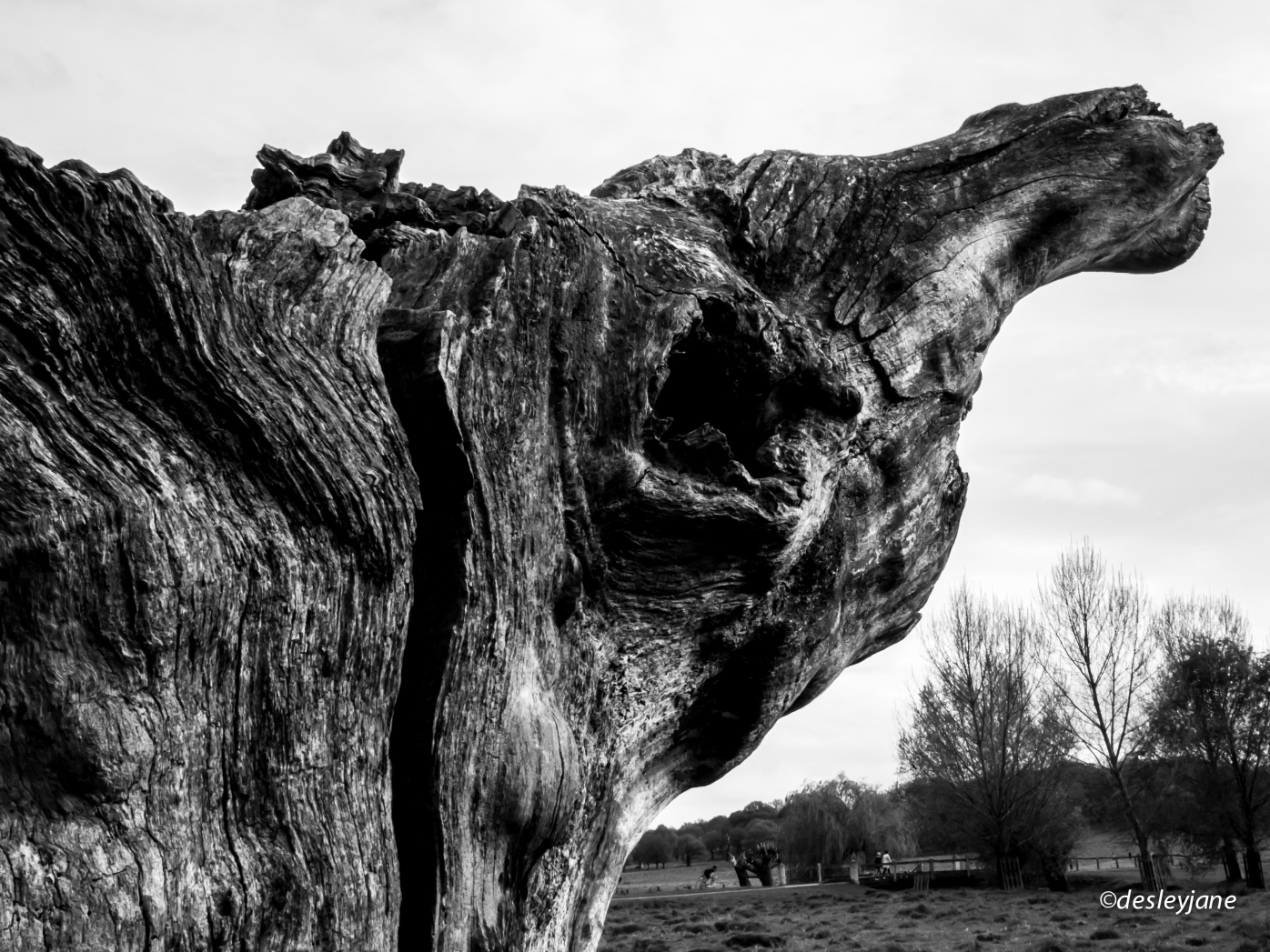 The split tree.
