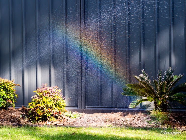 2015_Rainbow&Pine-1