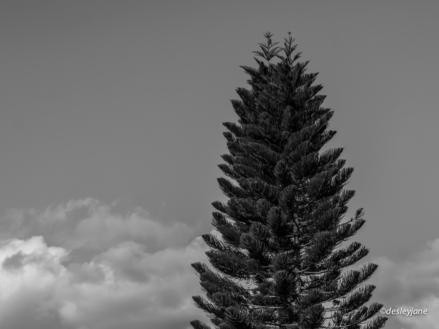 2015_Rainbow&Pine-3