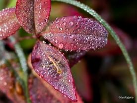 Among the dew.