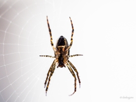 Spider Macro