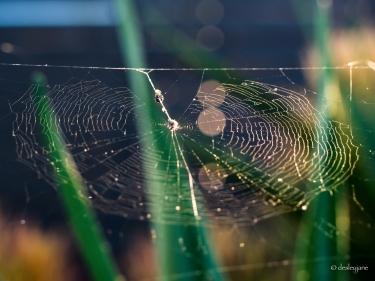 Web and Light.