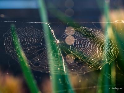 Web in Sunlight