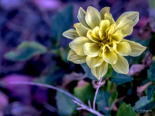 Delicate Yellow.