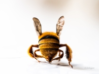 Bee Bum.