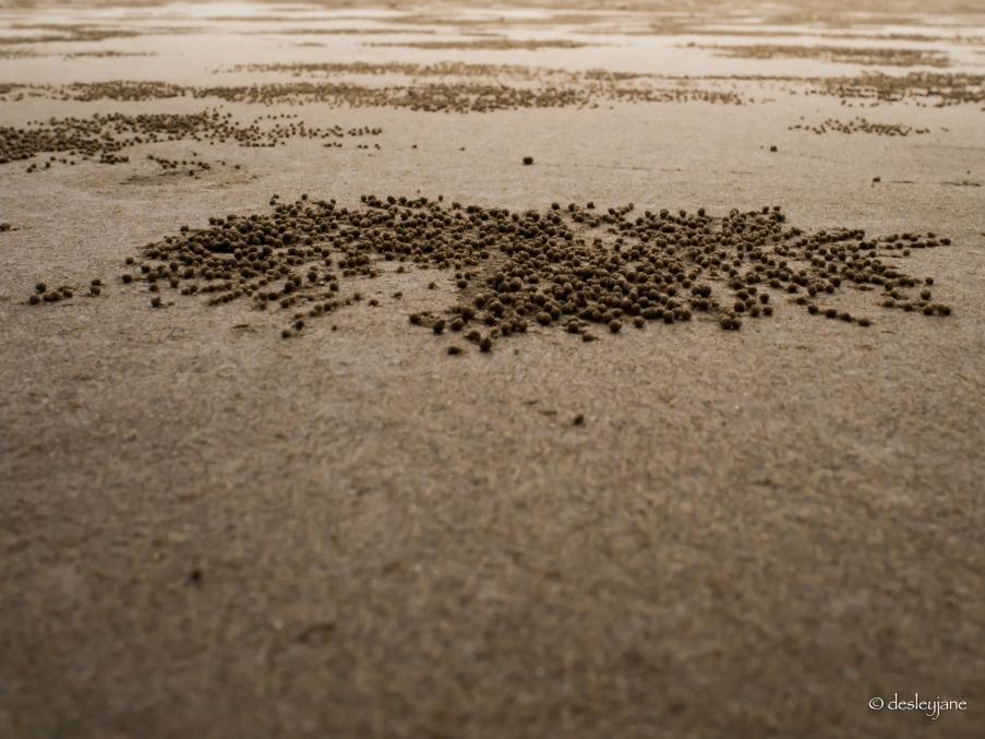 Crab balls.