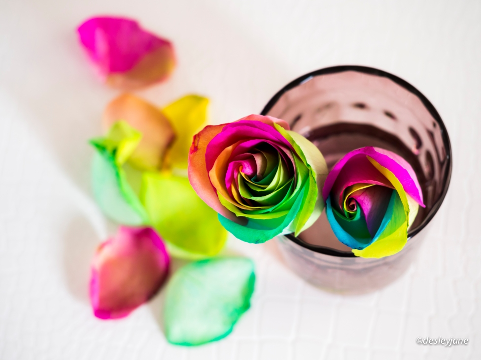 Rainbow Roses on Coffee Table.