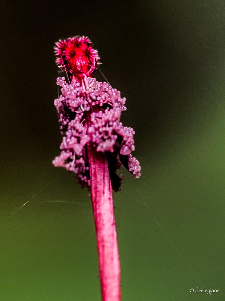 Pink Bits.