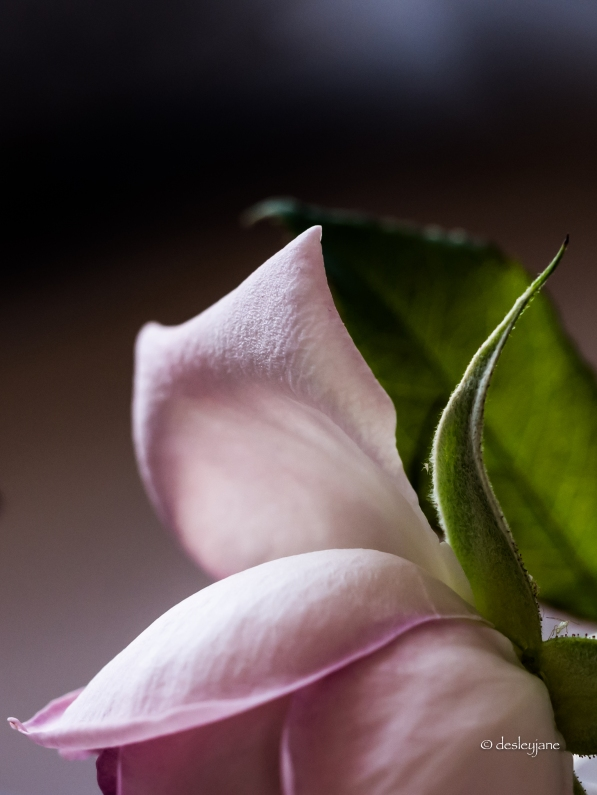 Another Rosebud.