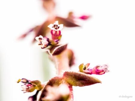 Tiny Flowers.