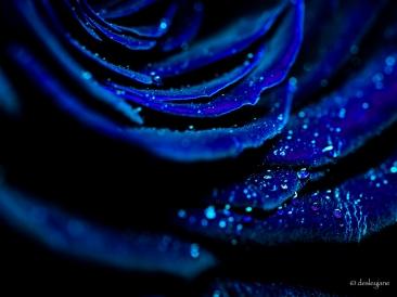 Like dusty blue velvet