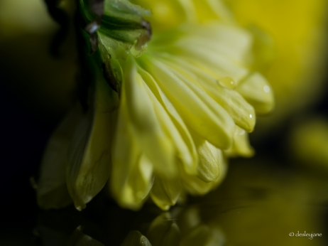 Yellow Petal Falling
