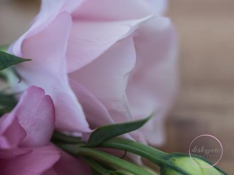 lizzianthus_60mm-13