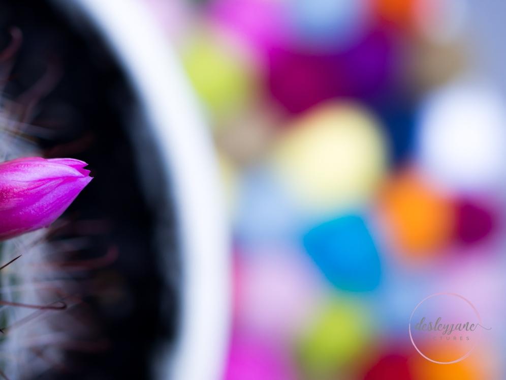 succulentpinkflower-20