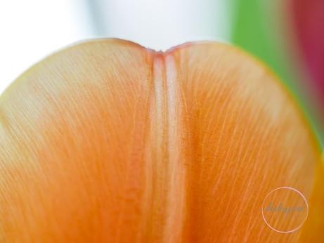 OrangeTulips-7