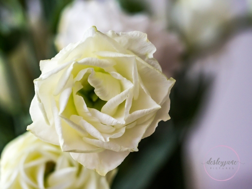 Lizzianthus&Iris-12