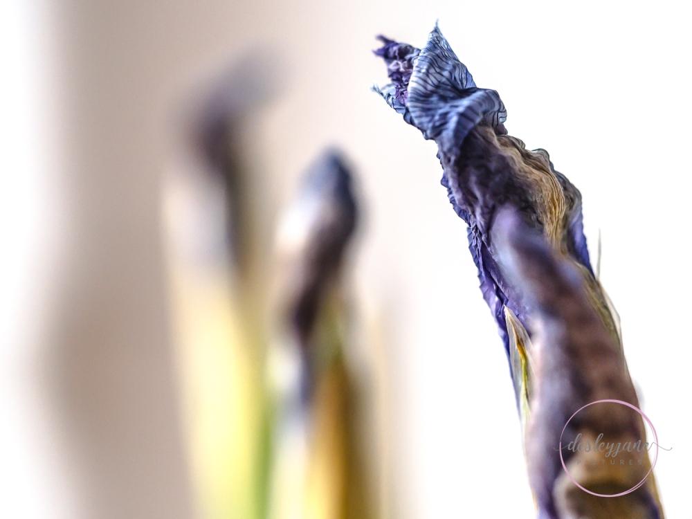 Lizzianthus&Iris-17