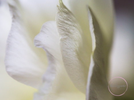 Lizzianthus&Iris-19