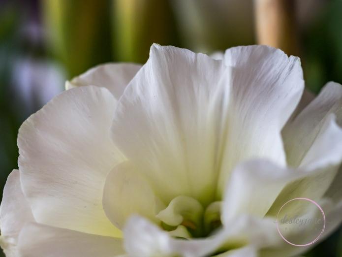 Lizzianthus&Iris-2