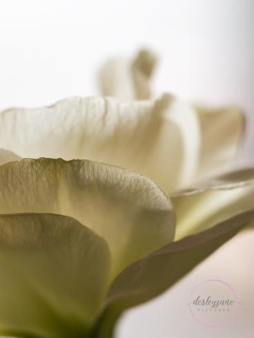 Lizzianthus&Iris-3