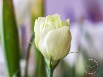 Lizzianthus&Iris-6