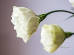 Lizzianthus&Iris-7