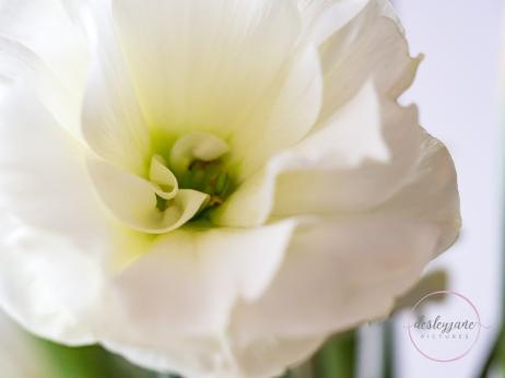 Lizzianthus&Iris-8