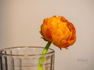 Ranunculus-18