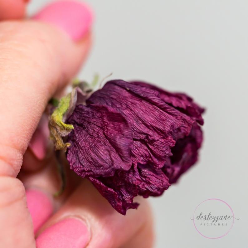 Ranunculus-28