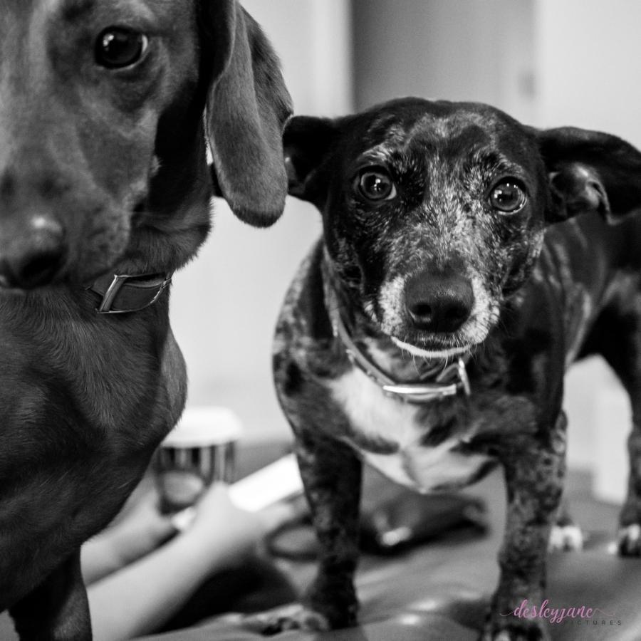 Murray&Molly
