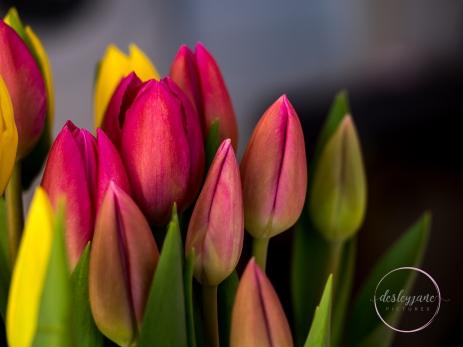 Pink&YellowTulips_closed-16