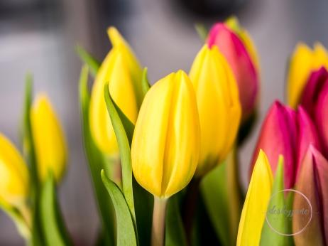 Pink&YellowTulips_closed-17
