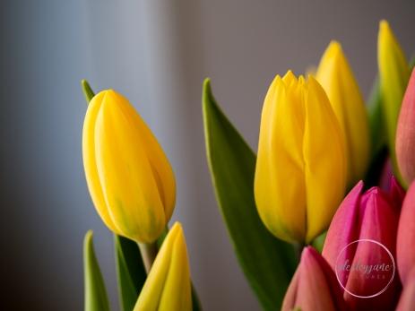 Pink&YellowTulips_closed-4