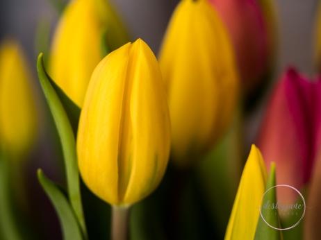 Pink&YellowTulips_closed-6