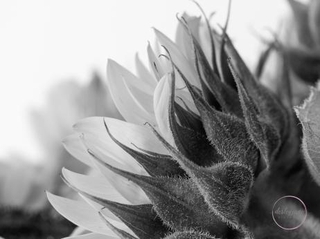 Sunflower Sides