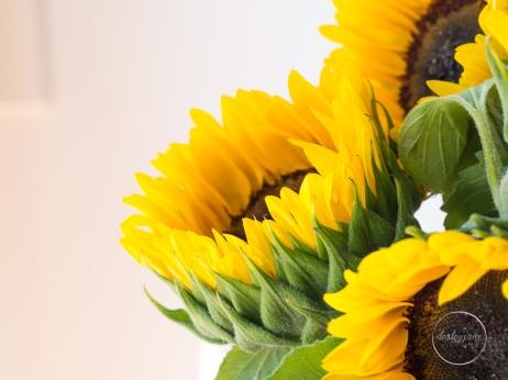 Sunflowers-34
