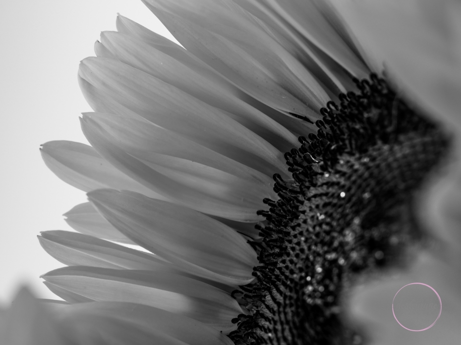 Sunflowers-45