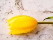 Yellow&PinkTulips-3