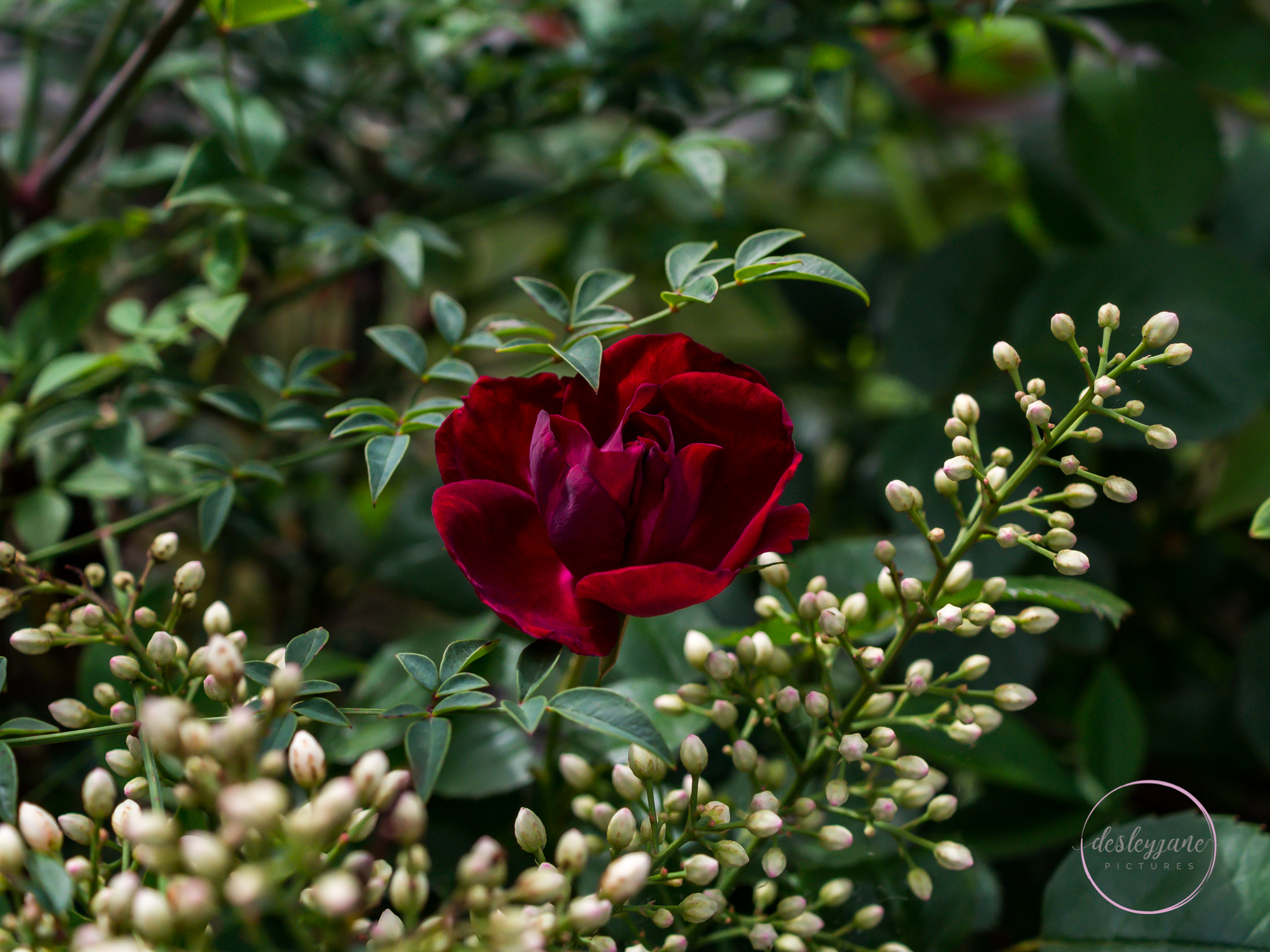 The Flowers of Brunswick East (33)