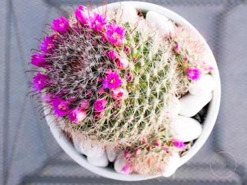 CactusFlowerCrown-1
