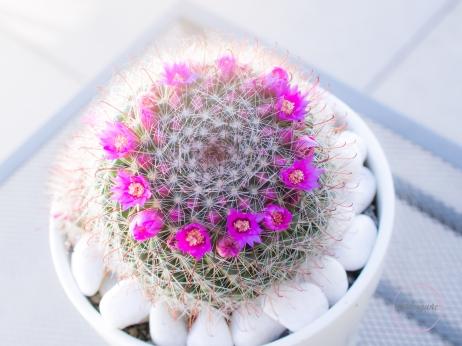 CactusFlowerCrown-10