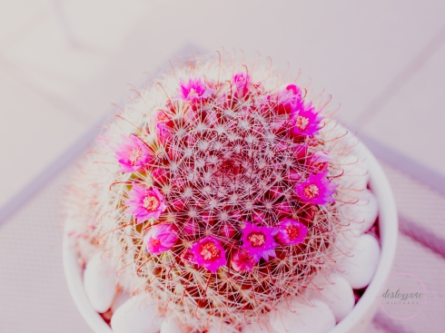 CactusFlowerCrown-12